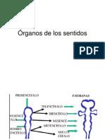 Clase Organos de Lo Sentidos (1)
