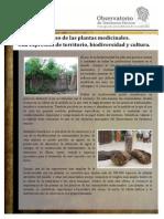 Plantas Palenque