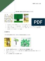 木を見る 絵本と写真史のお話会資料