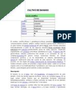 CULTIVO DE BANANO.docx