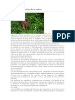 Lista de Animales de La Selva
