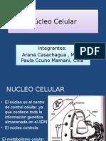 Núcleo Celular PPT.pptx