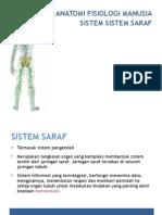 Anatomi Sistem Saraf Pusat Dan Sistem Saraf Tepi