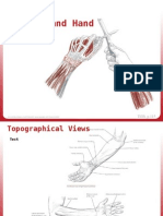 3-Forearm & Hand