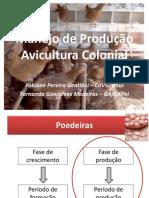 Avicultura Manejo Poedeiras