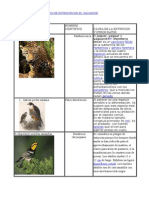 Animales en Peligro dANIMALES EN PELIGRO DE EXTINCIÓN EN EL SALVADORe Extinción en El Salvador