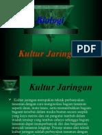 Presentasi Biologi Kultur Jaringan