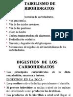 (02-OCT.14) 9.METABOLISMO_DE_CARBOHIDRATO_2004_IBIOQUIMICA[1]