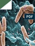 Penyakit Sipilis Dan Pengobatanya Pms