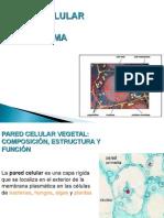 BIO CEL Clase 4 Pared Citosol-citoesqueleto