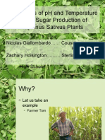 sugar production in radish