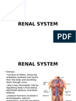 Renal System 1 PowerPoint Presentation