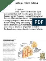 anatomi mikro tulang