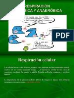 Tipos de Respiración III Clase