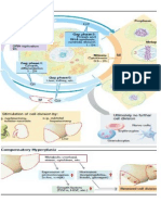 Patophysiology of Tumor
