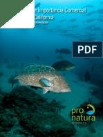 Aburto-Oropeza 2008 Serránidos de Importancia Comercial del Golfo de California.pdf