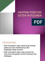 anfis-integumen(1)