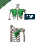 slike mišića