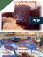 Allevamento Bufalo e Consistenze Aggiornate Al 2010