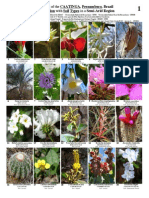 300_Caatinga_Plants-b1_1.pdf
