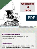 5. Bovini (Gestazione & Parto) (M)