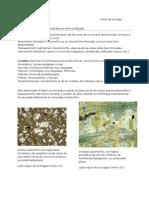 Forma y Habito de Minerales en Lamina delgada