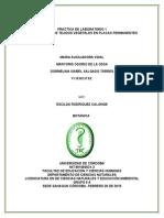 Informe 1- Observacion de Tejidos Vegetales
