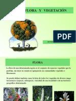 Flora y Vegetacion