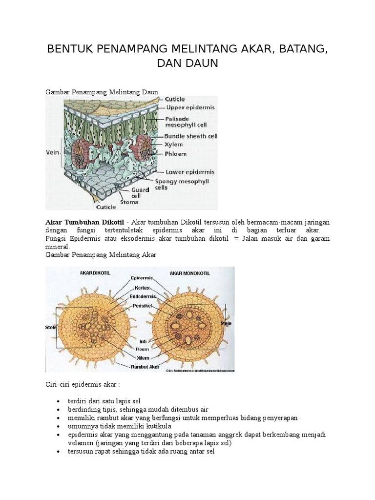 Makalah Struktur Jaringan Akar Daun Dan Batang