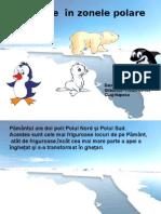 animalele polare.ppt
