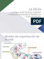 La célula y organización de la vida