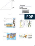Lecture 3-Membrane Structure