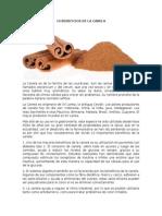 10 BENEFICIOS DE LA CANELA.docx