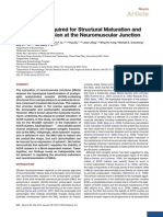 Ephexin1 is Required for Structural Maturation And