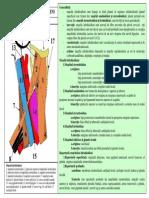 LP10 SEM2 BURCIN.pdf