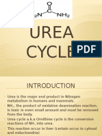 ureacycle 02