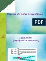 Cascada Del Acido Araquidonico