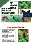 Man Ejo Ecolog i Code Plaga s