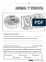 Célula Animal y Vegetal