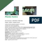 fiche technique - plante huitre