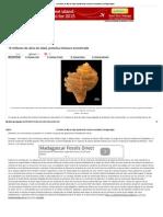 15 Millones de Años de Edad, La Proteína de Moluscos Encontrados _ Geología Página
