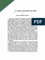 Cianoficeas y algas continentales de Cádiz