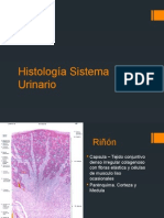 Histología Sistema Urinario