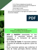 Proceso Fotosintetico (Parte 2) (1)