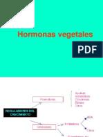 Hormonas vegetales