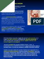 fiziologia intestinala