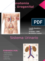 Anatomia Sistaem Urogenital