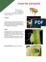 Insecte parazite.docx