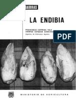 Cultivo de Endibia