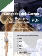 Cavidades Cuerpo Humano - Regiones y Zonas Topográficas